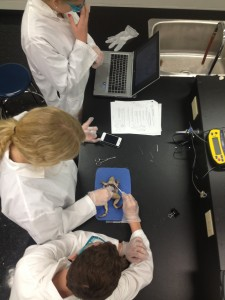 Lakefield College Students using technology to enhance their dissection
